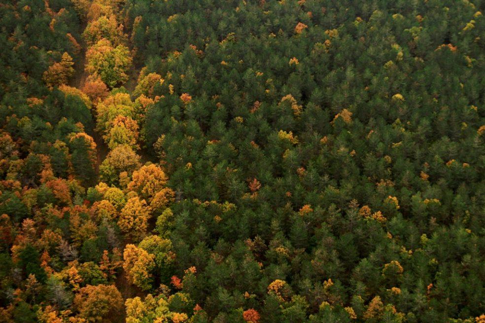 На Странджа баир гората/Strandzha hills' forest
